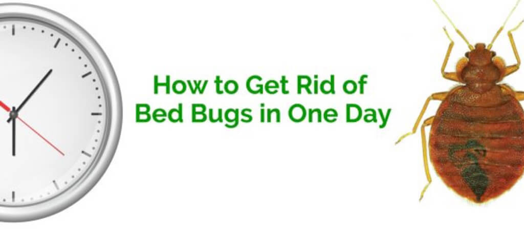 How to Get Rid of Bed Bugs in your Mattress in 3 Simple Steps